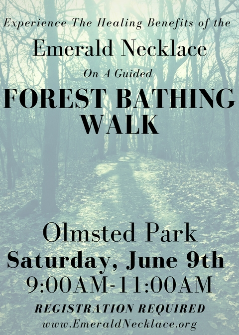 ENC Forest Bathing
